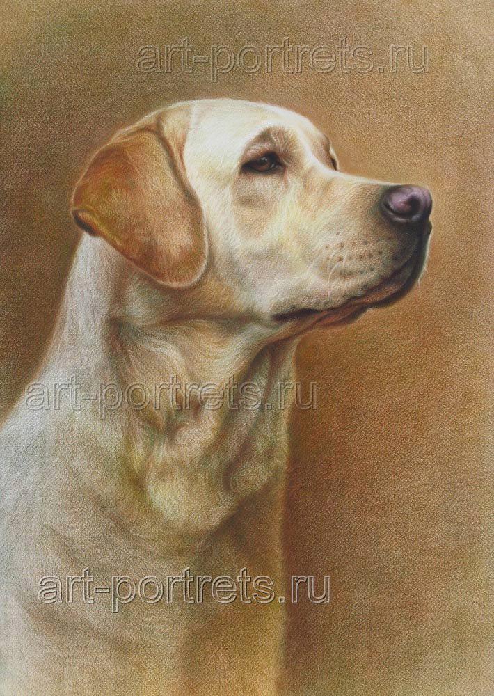 Labrador Retriever Drawings Labrador Drawings