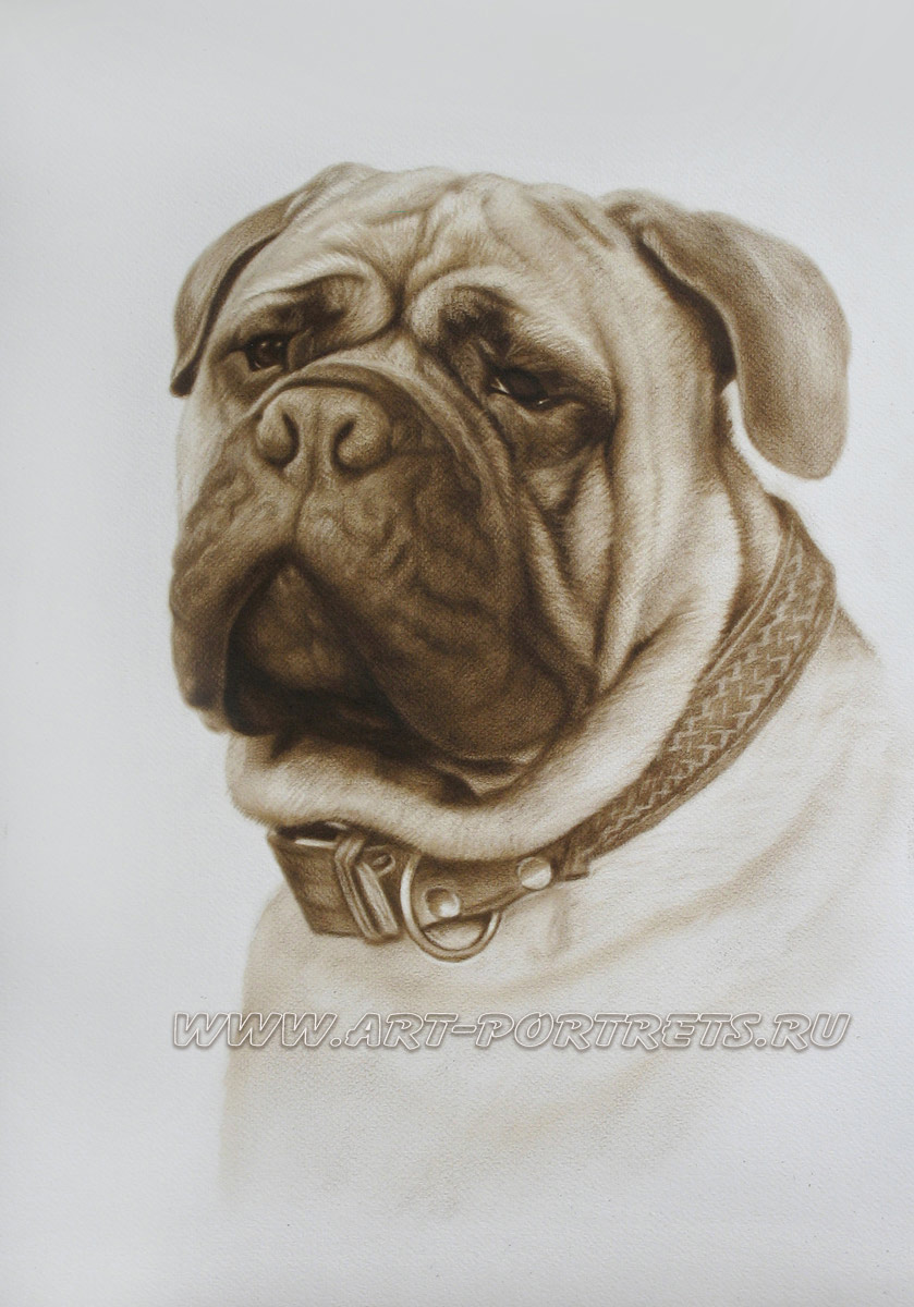 Drawing of dog face. Realistic drawing of dog. Pet ...