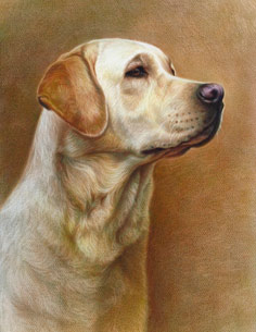 Drawing of dog color