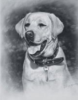 Labrador retriever drawings