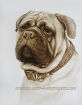Pictures of bull mastiff